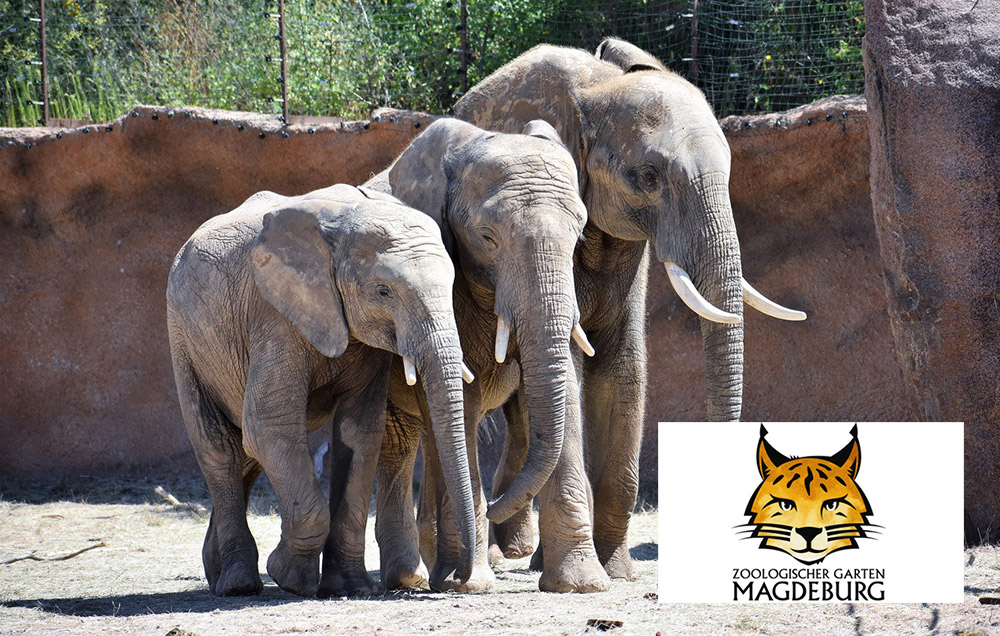 Foto: Zoologischer Garten Magdeburg
